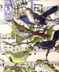 Birds and Stamps